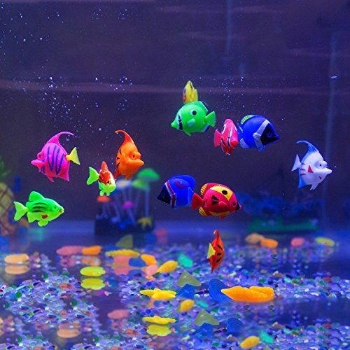 Fish aquarium gallery diagram writing sample and guide for Moai fish tank