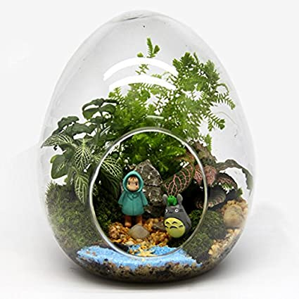 Amazon.com : Ochoos Gardening Egg Shaped DIY Moss Micro Landscape Glass Bottle Succulent Plants Vase Home Decoration - (Size: Small) - Garden Landscaping ...