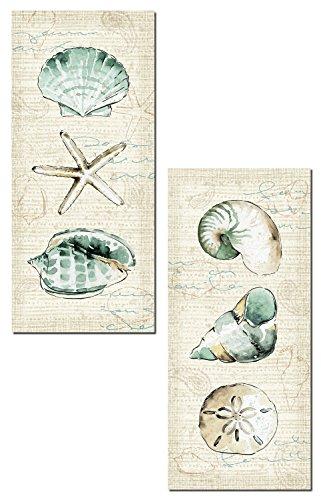 Beautiful-Spa-Shells-Conch-Starfish-Sand-Dollar-and-Unicorn-Shell-by-Pel-Studio-Coastal-Dcor