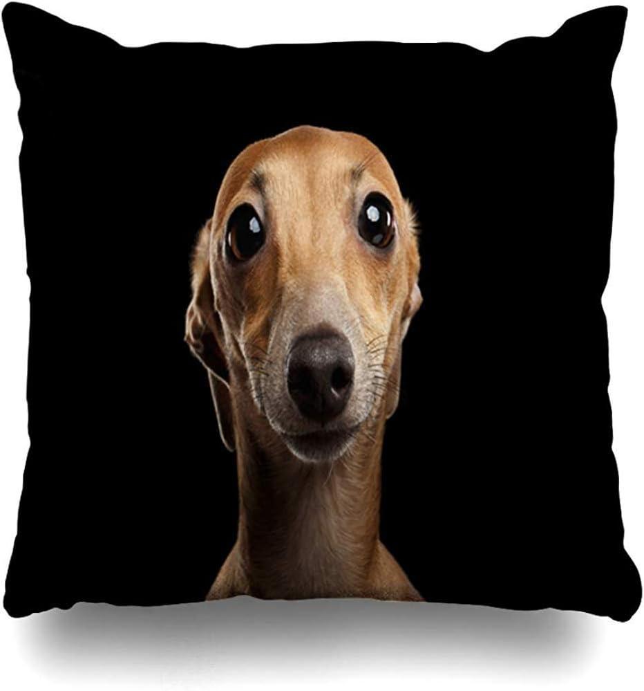 fenrris65 Funda de almohada de 45 x 45 cm, diseño de raza de animales, divertido italiano de alerta galgo, perro de pura raza de animales delgados, funda de cojín para cámara de vida silvestre