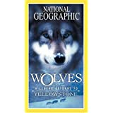 National Geographic: Wolves, A Legend Returns to Yellowstone