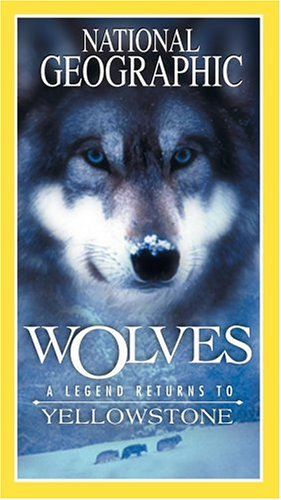 Wolves - A Legend Returns to Yellowstone [VHS] (Return Program Colour)