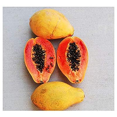 Strawberry Papaya Seeds - 15 Seeds : Garden & Outdoor