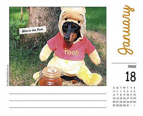 Crusoe the Celebrity Dachshund 2019 Box Calendar (Dog Breed Calendar)