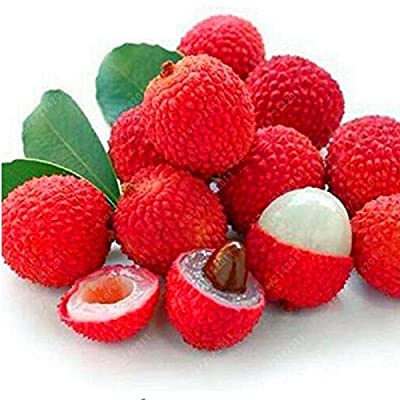 KOUYE GardenSeeds- Organic Litchi Seeds Fruit Seeds Exotic Litchi Tree Seeds Perennial Hardy Fruit Plants Seed Garden Delicious Fruit Seeds : Garden & Outdoor