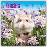 Hamsters 2017 Square (Multilingual Edition)