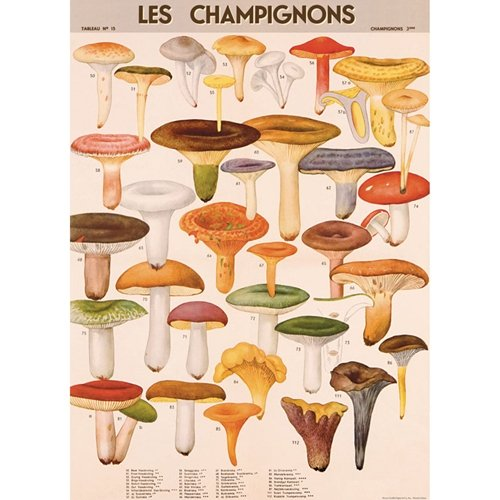 cavallini-decorative-paper-mushrooms-20x28-sheet