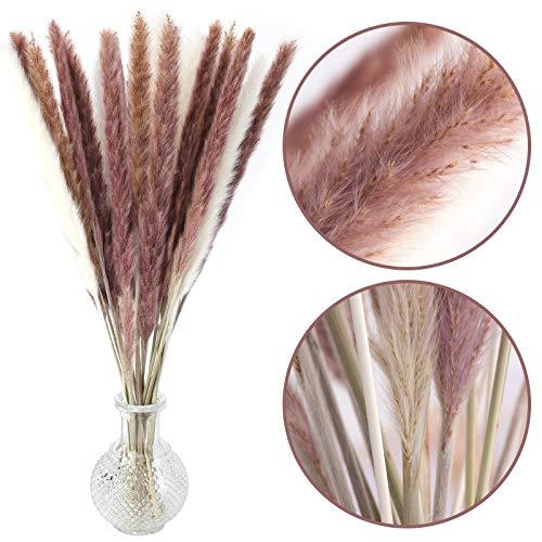 DomeStar 36PCS Pampas Grass, Natural Dried Pampas Reed Grass Plume Wedding Flower Bunch