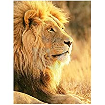 Big African Lion Sitting Sun Photo Art Picture Poster Print