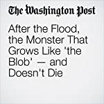 After the Flood, the Monster That Grows Like 'the Blob' — and Doesn't Die | Amy Ellis Nutt