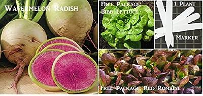 Watermelon Radish Seeds 450 Seeds Upc 646263361283 + 1 Plant Marker