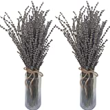 """2 large Bundles of GROSSO """"Grey Giant"""" Lavender - a beautiful long stemmed, gray/blue colored lavender variety - (Vases not included)"""