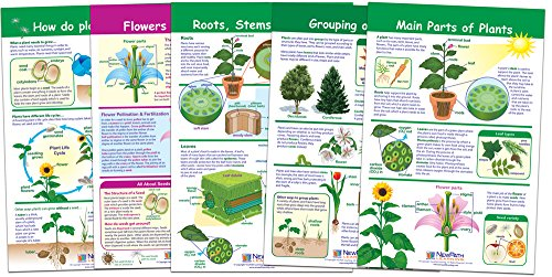 NewPath Learning 94-3501 All About Plants Bulletin Board Chart Set (Pack of 5)