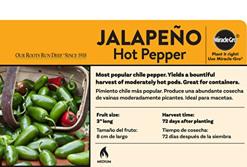 Bonnie Plants Jalapeno Hot Pepper Live Vegetable Plants - 4 Pack | Most Popular Chile Pepper | Non-GMO | 24 - 48 Inch Plants | 3 Inch Pepper Size by Bonnie Plants (Image #2)
