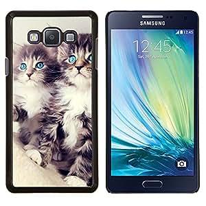 TECHCASE---Cubierta de la caja de protección para la piel dura ** Samsung Galaxy A7 ( A7000 ) ** --Gatitos del Coon de Maine del gato de pelo largo