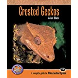 Crested Geckos: A Complete Guide to Rhacodactylus