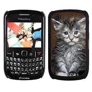 Print Motif Coque de protection Case Cover // V00000931 Gato Kitty patrón animal // Blackberry 8520 9300