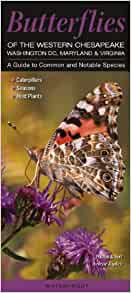 Butterflies Of The Western Chesapeake Washington DC Maryland Virginia A Guide To Common Notable Species