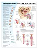 Understanding Erectile Dysfunction Anatomical Chart, Anatomical Chart Company Staff, 1587795450
