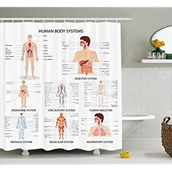 Human Anatomy Shower Curtain By Ambesonne, Complete Chart Of Different  Organ Body Structures Cell Life