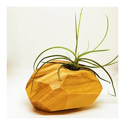 Air Plant Holder. One of A Kind (OOAK) Hostess Gift Home Decor Tiny Vase Succulent Vase Indoor Air Plant Succulent Holder