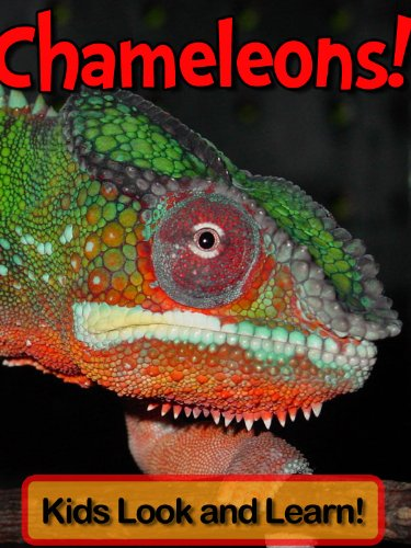 Chameleons! Learn About Chameleons and Enjoy Colorful Pictures - Look and Learn! (50+ Photos of Chameleons)