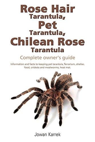 Rose Hair Tarantula Pet Tarantula Chilean Rose Tarantula Complete