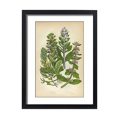 Victorian Pine Bracket - Media Storehouse Framed 24x18 Print of Bugleweed, Ajuga, Ground Pine, Carpet Bugle, Victorian Botanical (15102613)