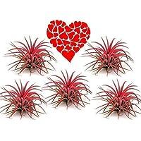 De las Madres Día, Día San Valentín Flores
