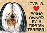 Love is… being owned by a Tibetan Terrier (White and black) 5