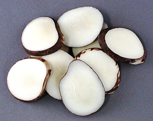 Tagua Nut Slices (Pack of 25) ()