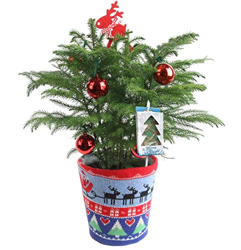 Decorated Ultimate Tree (Costa Farms Live Ugly Christmas Sweater Christmas Tree, 18 to 20-Inches Tall, Decorated with LED Fairy Lights and Ornaments, Fresh From Our Farm)