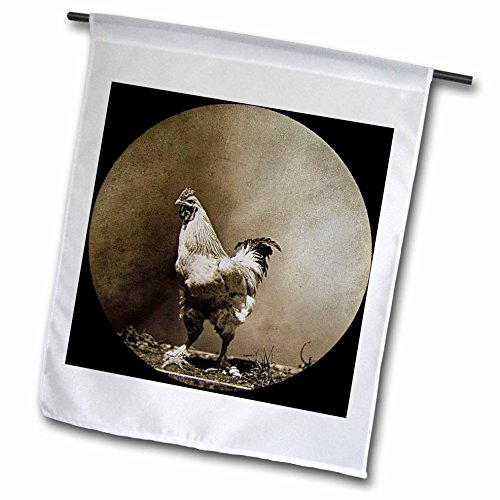 3dRose Scenes from the Past Magic Lantern Slides - A Study of a Rooster Vintage Early Americana Circa 1890 - 12 x 18 inch Garden Flag (Americana Rooster)