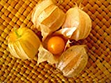 Cape Gooseberry,Giant Poha Berry,100 SEEDS (Physalis Peruviana) ,Ground Cherry