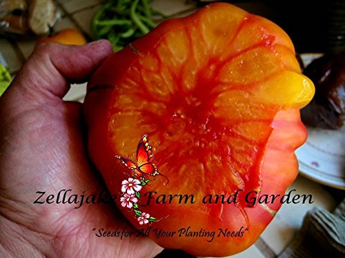 Old German Tomato Fresh Seeds No GMO Variety Pick Size Easy Grow #225 (6) ()
