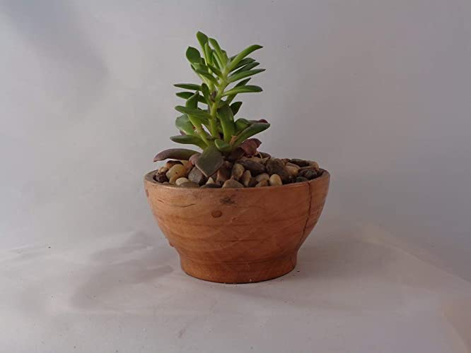 Hand Turned Small Wood Bowl/succulent Garden