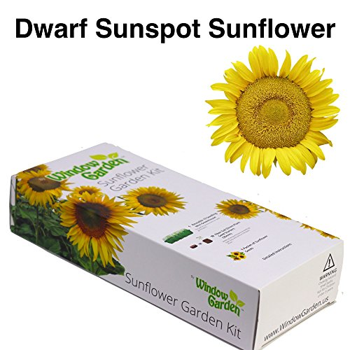 Kit Sunflower (Garden Starter Kit (Dwarf Sunspot Sunflower) – Grow sun flower seed in a mini greenhouse, then plant a beautiful patch of Sunflowers in your yard. It's easy, fun, and a great gift for adults and kids)