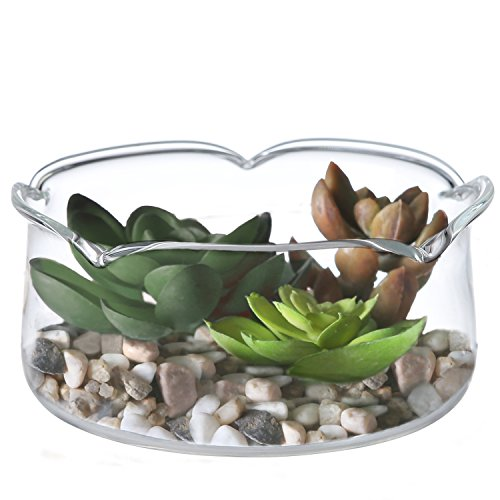 4 Inch Lotus Leaf Rim Glass Planter Display Vase Air Plant