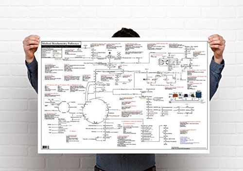Medical Biochemistry Pathways Poster  36 X 24 Inches  Non Laminate Standard