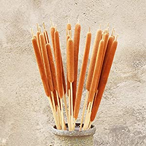 "Dried Natural Cattails, Preserved Cattails, Dry Bouquet, Wedding Flower Bunch, 20"" -24"" Tall Home Décor(Light tan) 16"