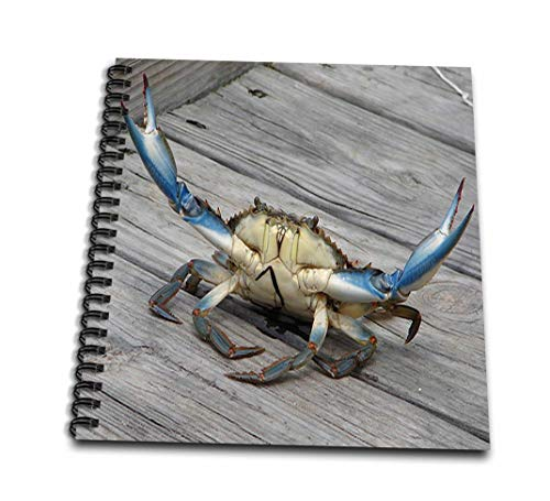(8x8 drawing book) - Taiche - Photography - Crab - Blue Crab - marine creature animal animals wildlife ocean invertebrate blue crab seafood - Drawing Book