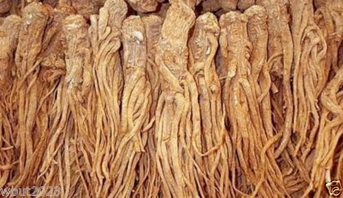 Female Ginseng Seeds - Dong Quai, Chinese Medicine Herb, Angelica Sinensis