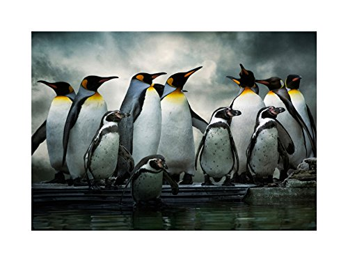 (PHOTO NATURE EMPEROR PENGUIN BIRDS FRAMED PRINT F12X3283)