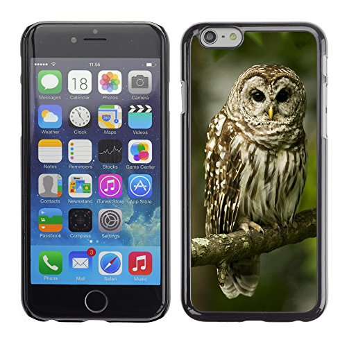 Premio Sottile Slim Cassa Custodia Case Cover Shell // V00003682 hibou sur une branche // Apple iPhone 6 6S 6G PLUS 5.5""
