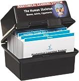 "3B Scientific W11505 The Skeletal System Human Anatomy Flash Cards, 4-1/8"" Length x 3"" Width"
