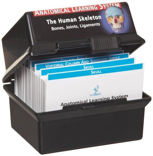 3B Scientific W11505 The Skeletal System Human Anatomy Flash Cards, 4-1/8