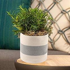 Wicker Planter Baskets