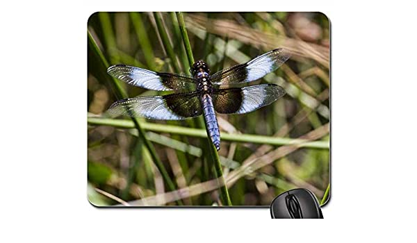 Amazon com : Mouse Pads - Widow Skimmer Skimmers Dragonfly