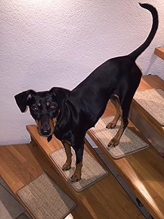 BELLOsteps® Stufenmatten für kleine Hunde ohne Kleber, 13er Set ...
