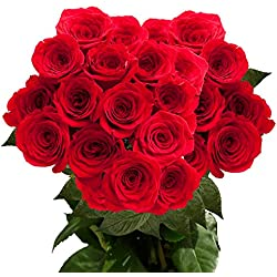 50 Fresh Cut Red Roses | Freedom Red Roses | Fresh Flowers Express Delivery | Perfect for Valentine's Day, Birthdays, Anniversary or any occasion.